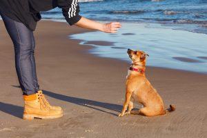 Training dog with reward.