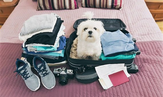 Small dog sitting in the suitcase and waiting for a trip