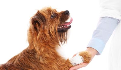 A picture of a dog with hurt paw giving thanks to the vet.